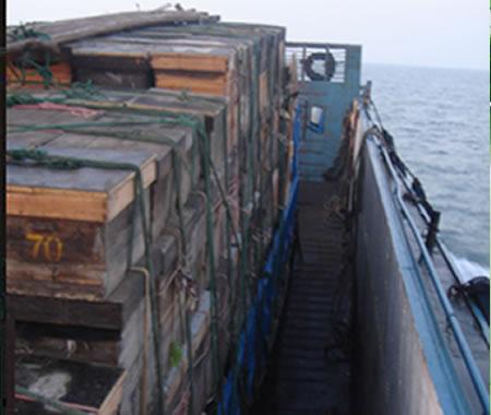 军用登陆艇运送蜜蜂到海岛采洋槐蜜