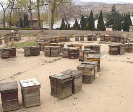 早春的花粉基地